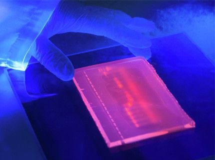 Electrophoresis and Hybridization